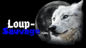 Loup-Sauvage