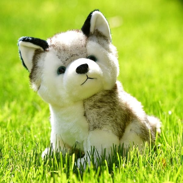 1 Peluche Loup Husky dans l'herbe